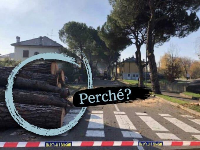 La vicenda dei pini di via Trieste, spiegata bene